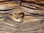 Jak efektywnie obronić posiadane drewno przed pasożytami?